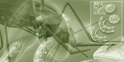Spécialités Médicales - Divers - Maladies parasitaires