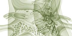 Pathologies - Système nerveux périphérique - Hernie discale
