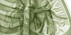 Spécialités Médicales - Pneumologie - Poumons / Embolie