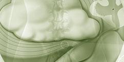 Spécialités Médicales - Rhumatologie - Dos