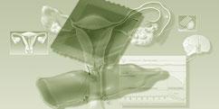 Spécialités médicales - Gynécologie - Obstétrique / Contraception