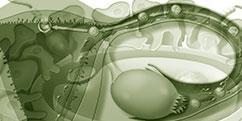 Spécialités médicales - Gynécologie - Maternité / Fécondation naturelle