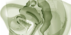 Spécialités Médicales - Gynécologie - Pathologies / Endométriose