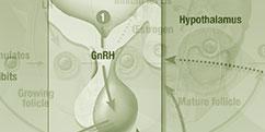 Spécialités Médicales - Hormonologie / Endocrinologie - Système hypothalamo-hypophysaire / Croissance-Puberté