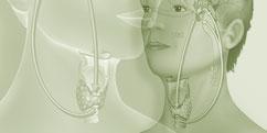 Spécialités Médicales - Hormonologie / Endocrinologie - Système thyroïdien