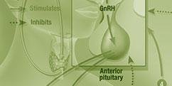 Spécialités Médicales - Hormonologie / Endocrinologie