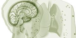 Spécialités Médicales - Pédiatrie - Maladies infantiles