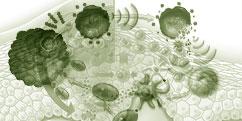 Spécialités Médicales - Immunologie / Épidémiologie - Réactions immunitaires / Divers