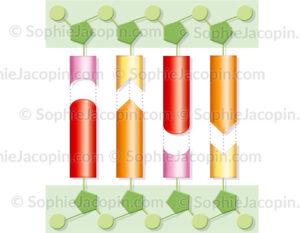 Structure chimique de l'ADN