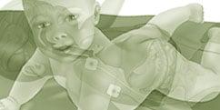 Spécialités médicales - Pédiatrie - Prématuré / Bébé