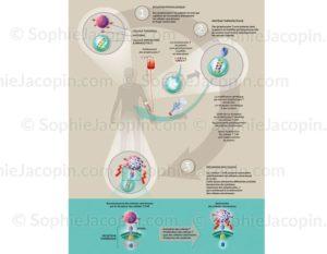 Immunothérapie contre le cancer