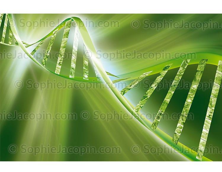 Double hélice d'ADN