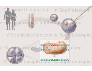 Modification de l'hérédité