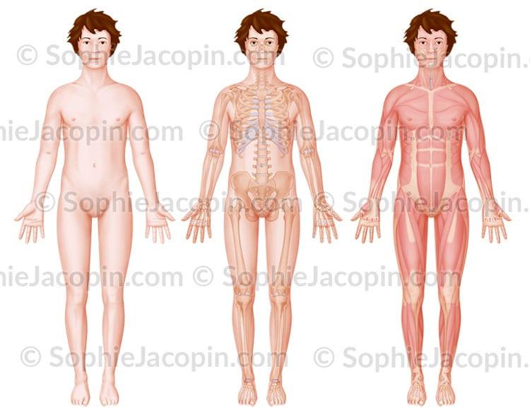 Anatomie de face