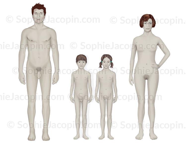 Illustration medicale - puberté