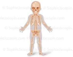 Squelette-enfant-face