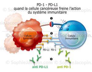 Immunomodulateurs