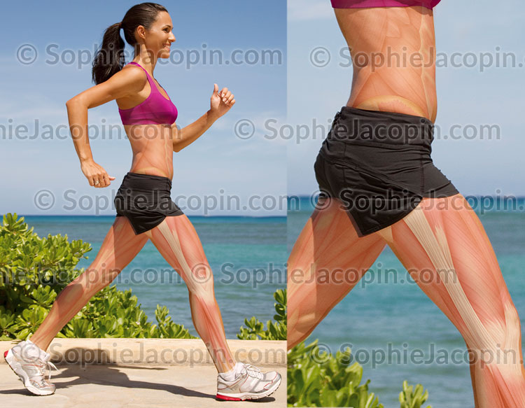 Illustration medicale_Sport et musculature