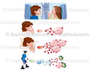 Contamination virale, réplication, guérison grâce au système immunitaire - © sophie jacopin