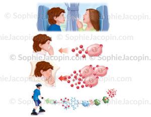 Réplication du virus du rhume jusque'à la guérison - © sophie jacopin