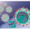 Fixation du coronavirus à la cellule hôte - © sophie jacopin