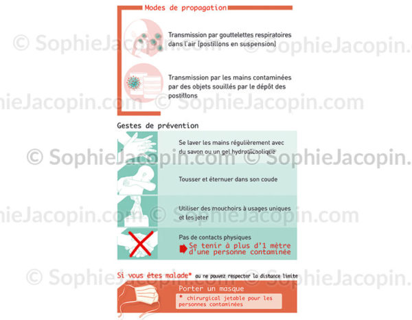 Coronavirus-Propagation-Gestes préventifs- c sophie jacopin