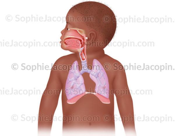 Les voies ORL et pulmonaires chez l'enfant en bas-âge - © sophie jacopin