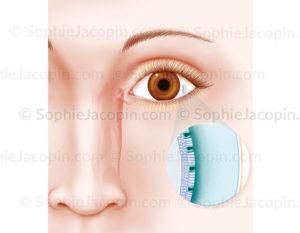 Le film lacrymal et de ses différentes couches - © sophie jacopin