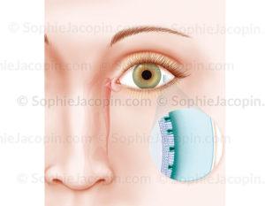 Le liquide lacrymal constitue un film lacrymal composé de différentes couches - © sophie jacopin