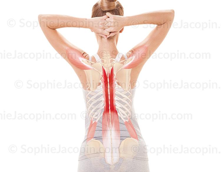 Illustration medicale_Anatomie posturale-Point de concentration région dorsale