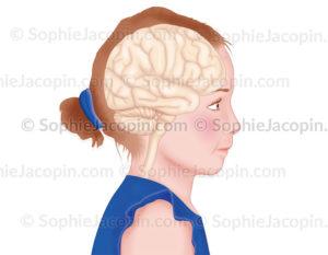 Cerveau en transparence dans un visage de fillette, localisation du cerveau - © sophie jacopin